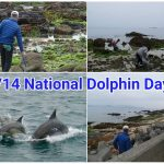4/14 National Dolphin Day