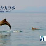 野生イルカが背びれにケガを負っているのを発見。原因を考えてみる